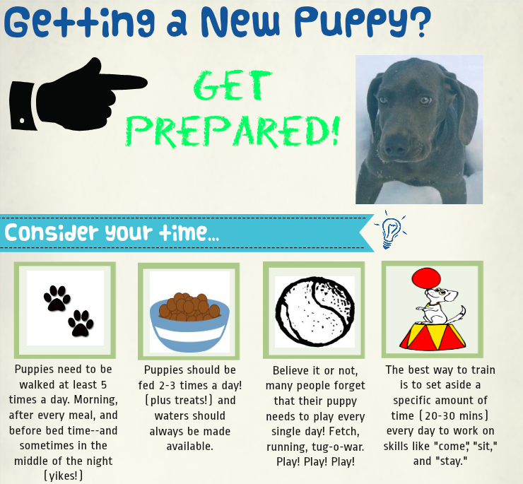 New Puppy Supplies Time Schedule